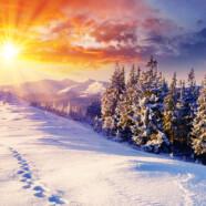Intarirea rinichilor in perioada iernii – fundatia pentru viata anului viitor
