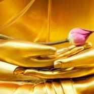 Curs Qigong, forme mixte – Duminica 5 noiembrie