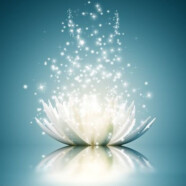 Colectarea energiei prin Floarea de Lotus