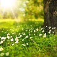 11 martie 2017 – Curs Qigong: Primavara, Ficat, Verde…