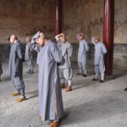 Curs Yi Jin Jing si Qigong asezat – Duminica 19 noiembrie